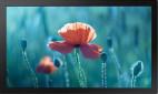 Samsung QB13R - Demoware